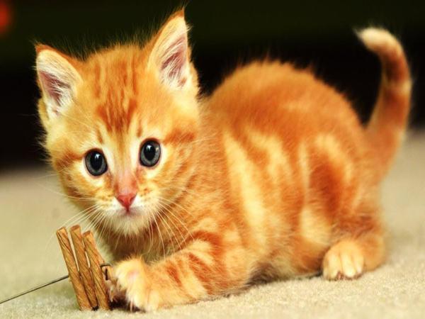 Mèo chạy vào nhà là điềm báo gì