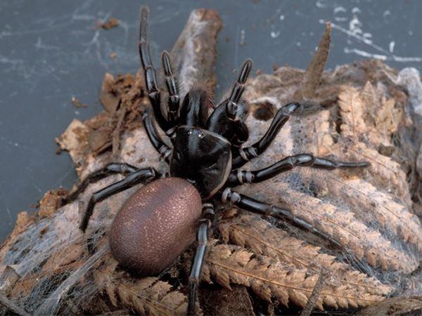 Mơ thấy nhện là điềm đen hay đỏ? Thử vận may với con số nào?