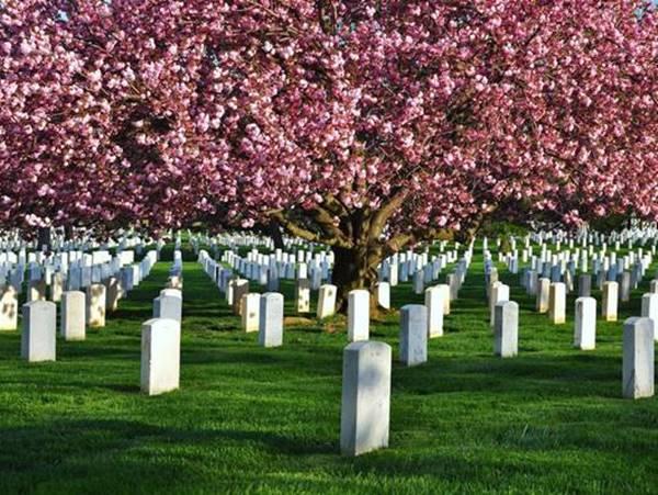 Mơ thấy nghĩa địa lựa chọn cặp số nào xác suất trúng cao?