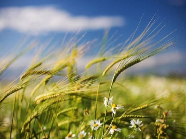 Mơ thấy gió là lành hay dữ? Nên đánh số nào?