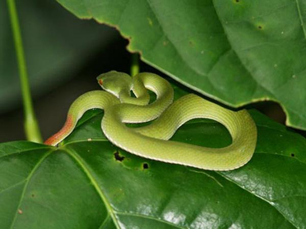 Nằm mơ thấy bị rắn cắn đánh xổ số con gì dễ trúng