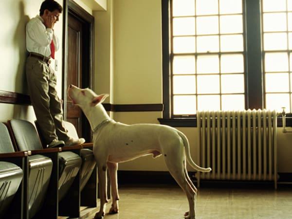 Mơ thấy bị chó đuổi điềm báo tốt hay xấu?